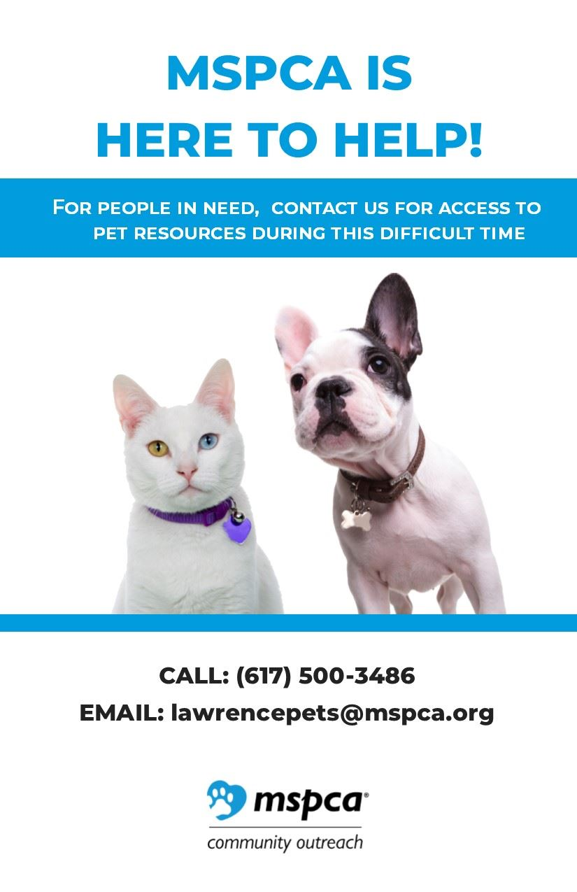 MSPCA Help for Pets Owners During COVID 19 Pandemic